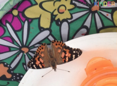 Butterflies for the Littles with Garden Giveaway!