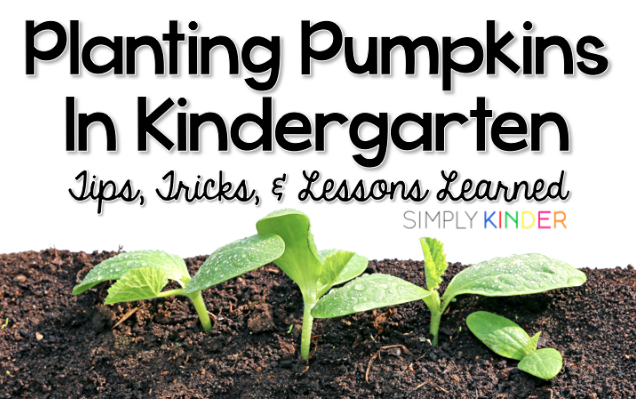 Planting Pumpkins in Kindergarten