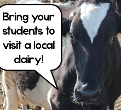 Visiting a Local Dairy Farm – A great field trip for your students!