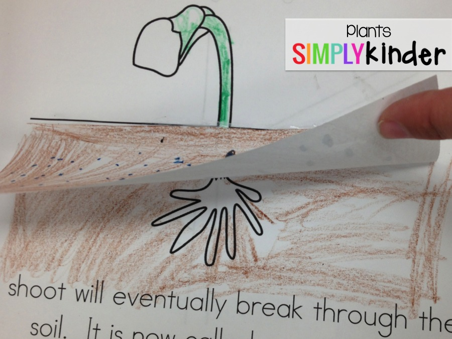 Plants activities for Kindergarten from Simply Kinder ... on plant cell activity, phases of the moon kindergarten, plant life cycle activity, plant ideas and activities resources, simple machines kindergarten, plant classification key, plant activities for preschool, plant activities for toddlers, plant activities daycare, plant activities social studies,