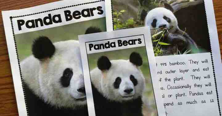 Nonfiction Panda Activities