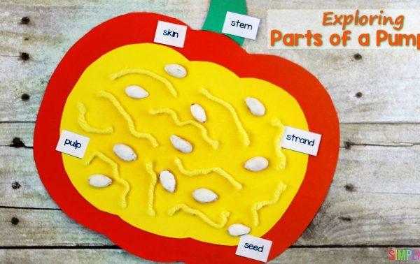 Exploring the Parts of a Pumpkin