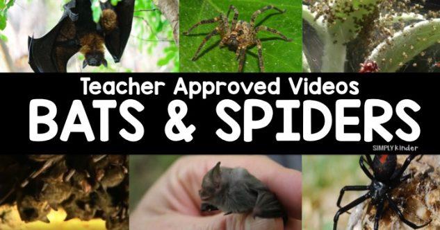 Bat & Spider Videos for Kids