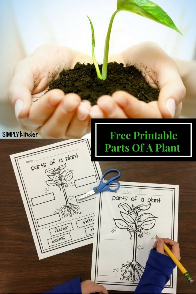 Parts Of A Plant Free Printable from Simply Kinder