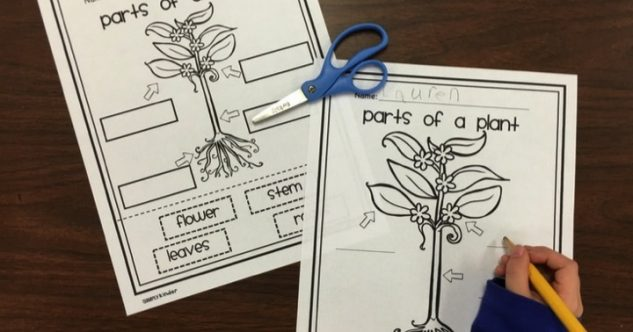 Parts Of A Plant Free Printable