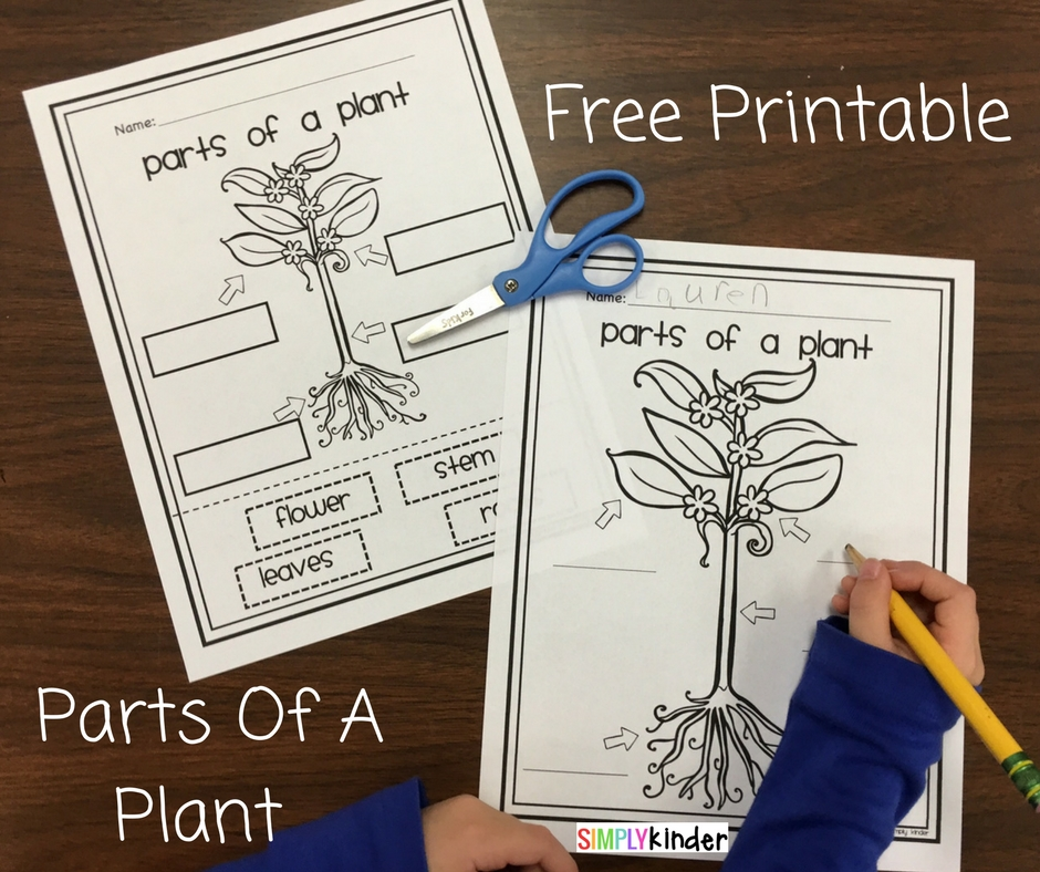 Parts Of A Plant Free Printable - Simply Kinder