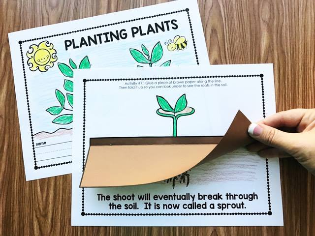 Planting Plants in Kindergarten! Use this fun, interactive journal to walk you through the process and learn about the plant life cycle from Simply Kinder. Perfect or preschool, kindergarten, and first grade classrooms. Available on Teachers Pay Teachers from Simply Kinder.