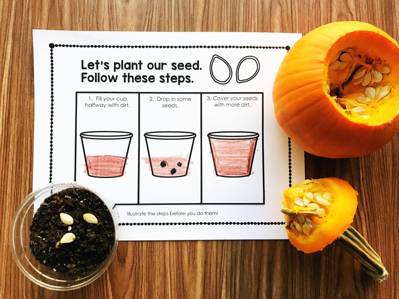 Are you planning pumpkins in preschool, kindergarten, or first grade? This interactive science book will walk you through the process and teach your students about the pumpkin life cycle. A fun little interactive book from Simply Kinder.