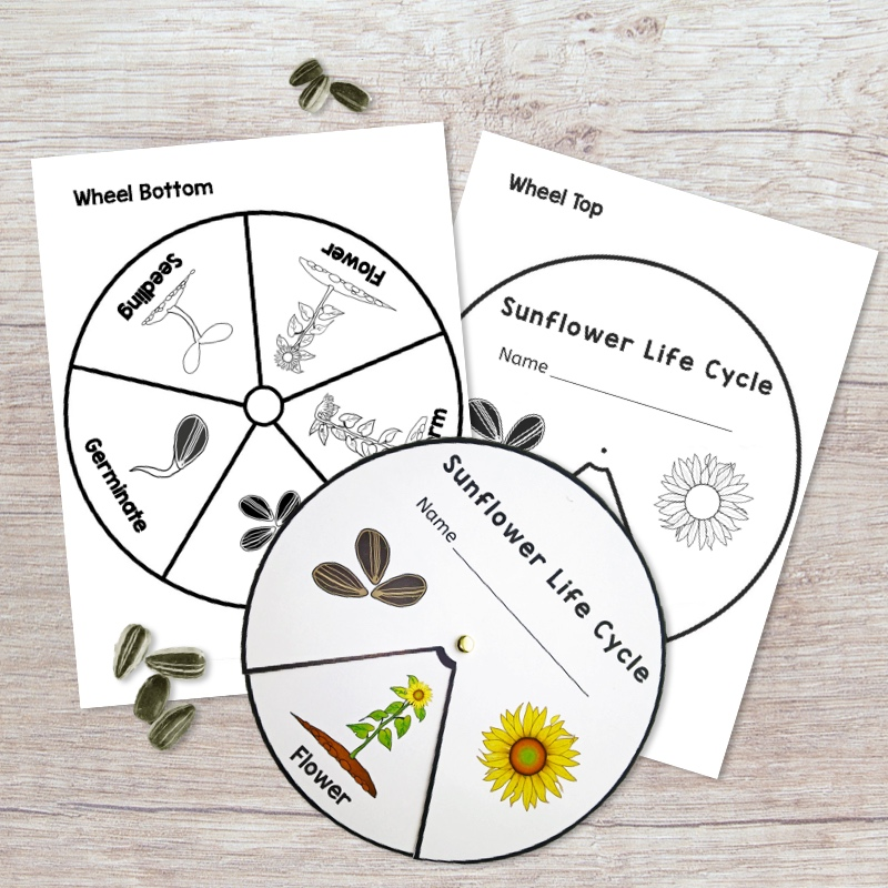 19 Creative Resources to Help You Plan A Plant Science Unit