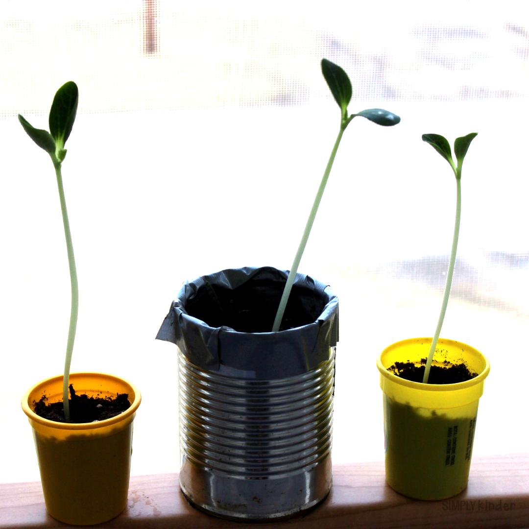 Easy classroom greenhouse