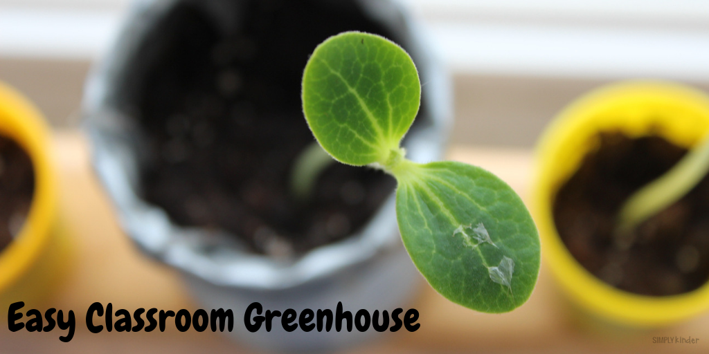 Easy Classroom Greenhouse